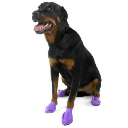 pawz-dog-boot-large