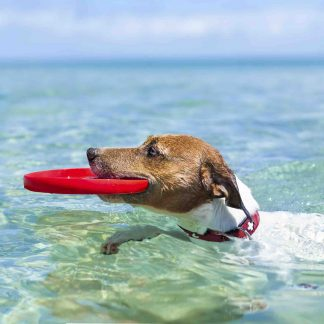 Dog Cooling Products
